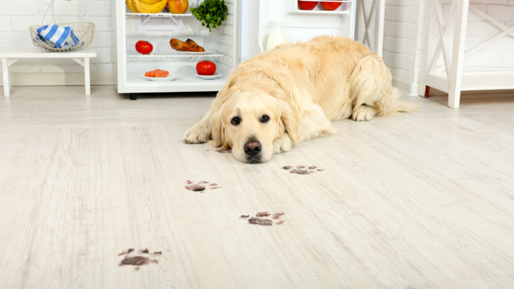 Dogs laying on the white flooring with dirty paws footprints